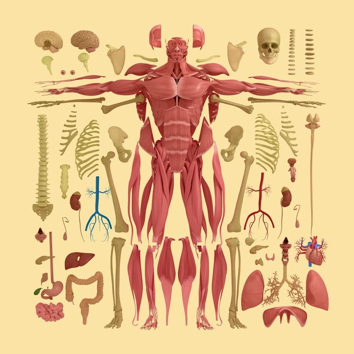 fascia-tratamieto-fisioterapia
