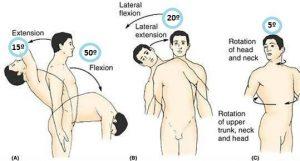 raquis- lumbar-espalda-rangos-articulares