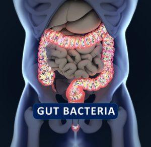 microbiota-probioticos-fermentación-salud