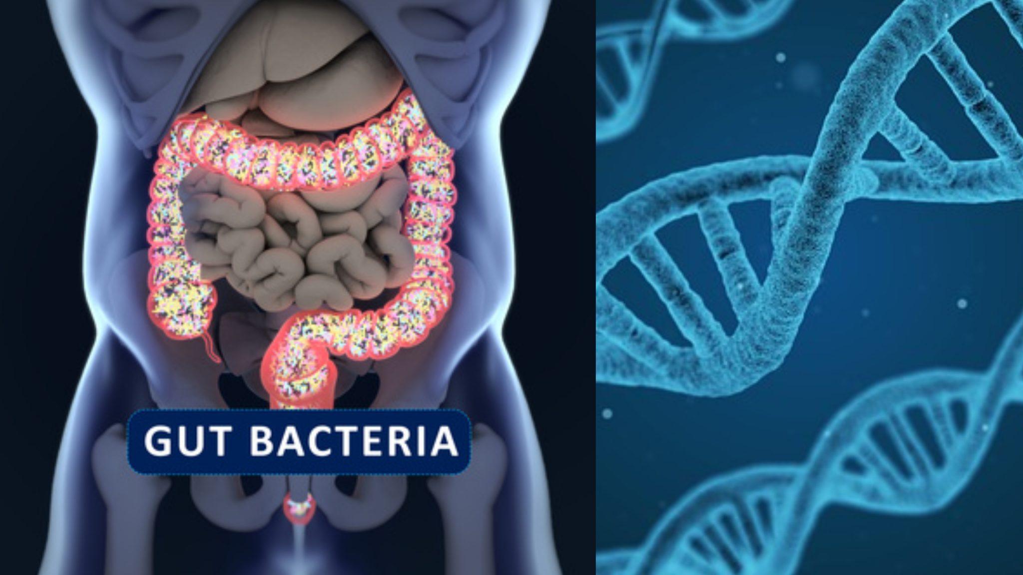 comer-segun-genes-microbiota