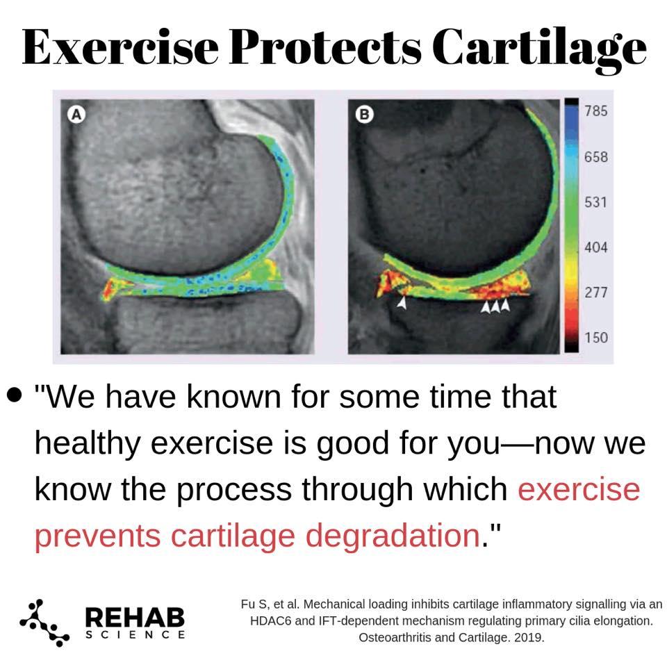 Ejercicio Y Cartilago 1